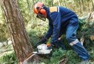 Iron Baron Tree cutting services 21